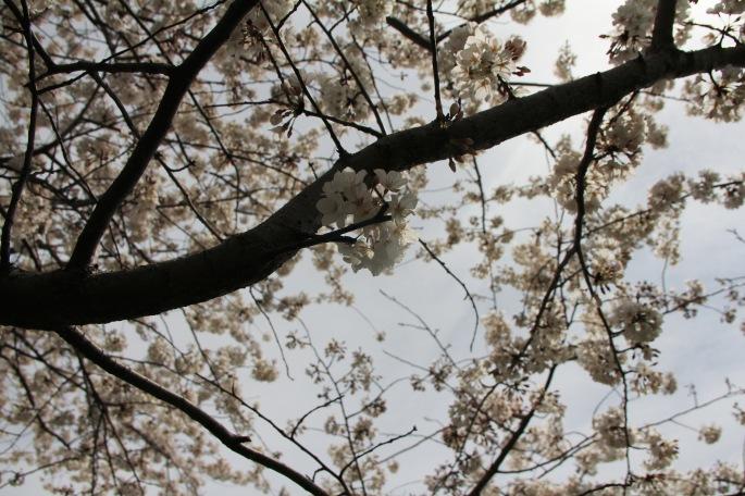 Flowers_nature^^